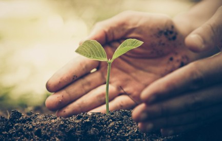 Seedling growing from the soil with gardeners hands cupping around plant.