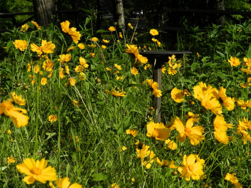 photograph of yellow flowers surrounding a birdbath