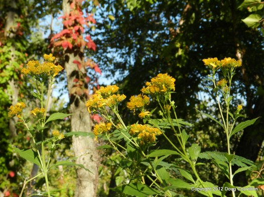 photograph of yellow wildflowers with red leaves in the background