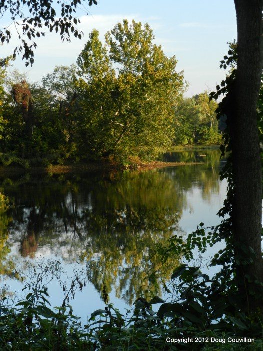 Photograph of a tree and its reflection in the James River