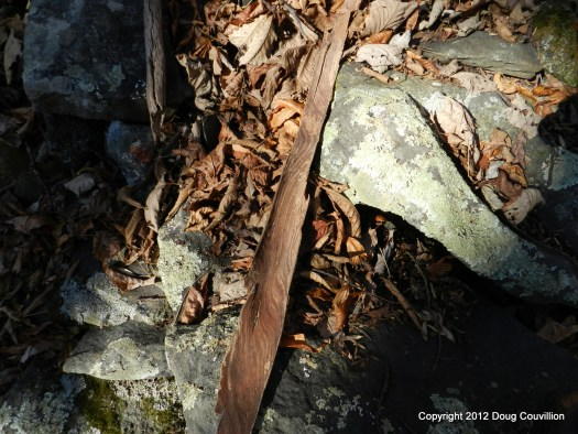 photograph of fallen bark, leaves and stones on the forest floor