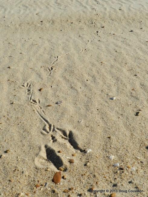 photograph of bird tracks on a beach
