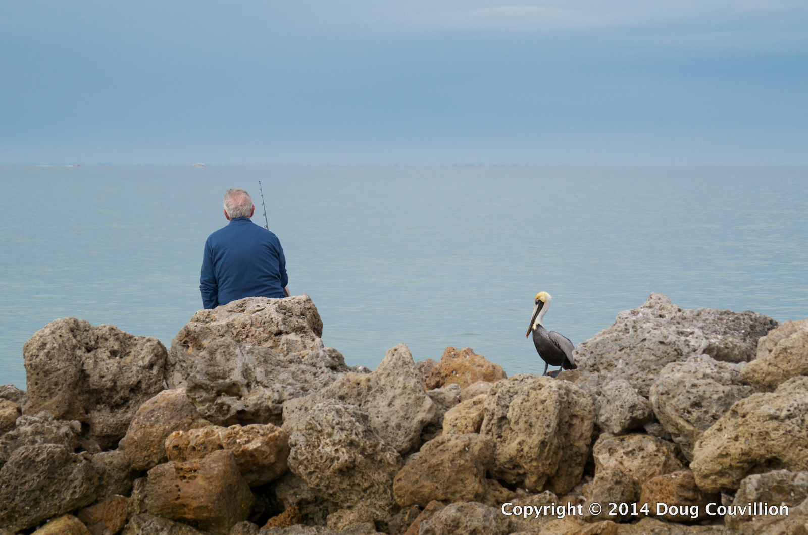 photograph of a Brown Pelican standing on a rocky jetty watching a fisherman