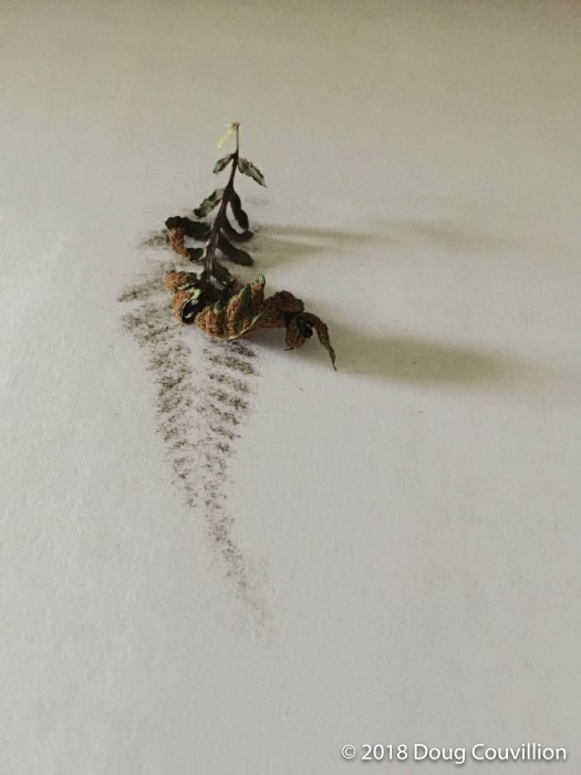 photograph of a dried fern leaf and spores by Doug Couvillion