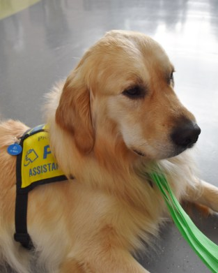 Puppies provide mental health therapy for students
