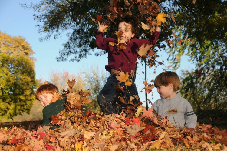 Three young boys playing in a pile of autumn leaves