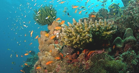 Coral reefs like this one support a wide diversity of ocean life. (click for credit)