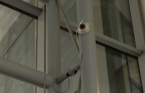 One of the cameras tied to a pillar