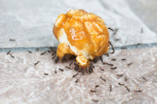 Mengusir semut via freepik ala tim duniamasak.com