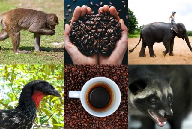 Berbagai kopi yang ekstrim