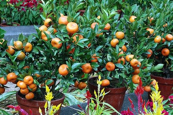 Tips berkebun buah di lahan yang sempit ala duniamasak ala Berkebun buah via bibitonline.com