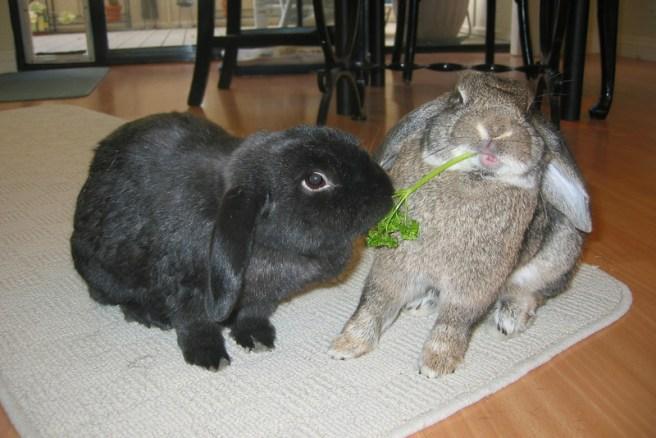 Bunny Bonding Dunster House