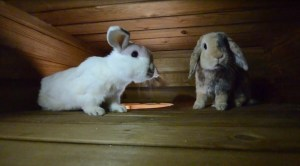 RabbitingOn