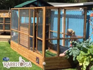 Rabbitopia Dunster House