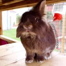 Customer Reviews Rabbitopia Dunster House