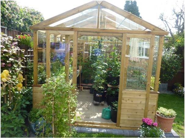 Garden needs a greenhouse - Tulipley Greenhouse