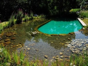 Natural-Swimming-Ponds