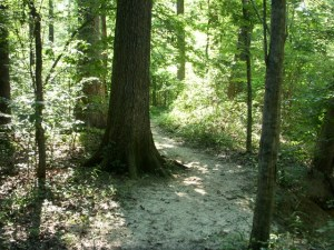trail-of-big-trees-noxubee-refuge