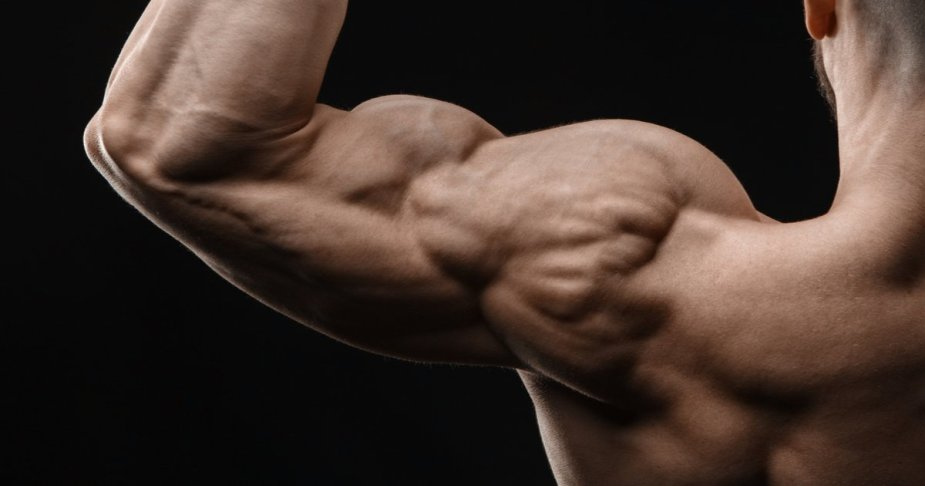 A photo showing the back of a person with the focus being on his shoulder and bicep.