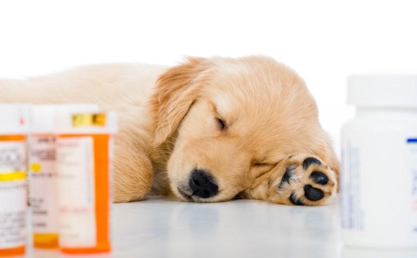 Generic Pricing in Veterinary Practice