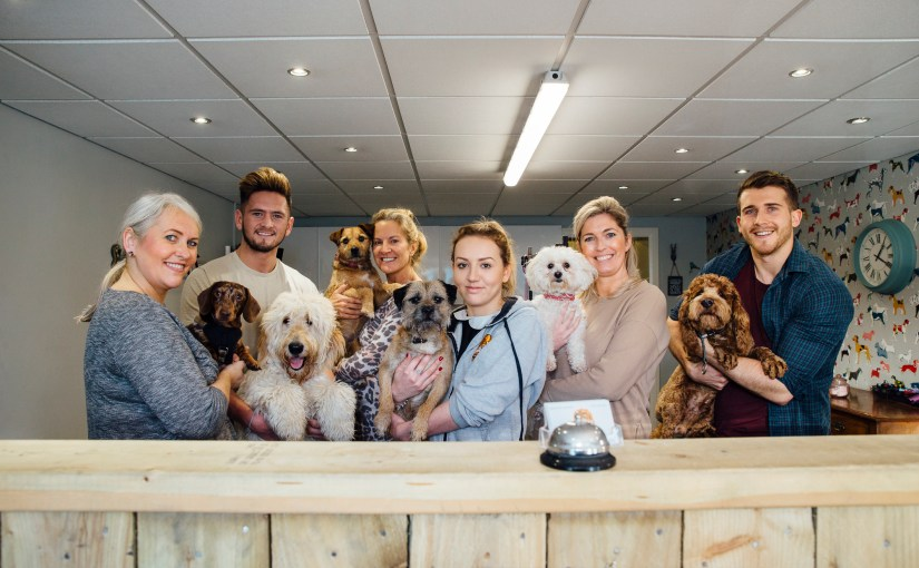 Top 5 Places to Find Veterinary Employees