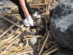 Visita de estudo à Reserva Natural Parcial do Garajau