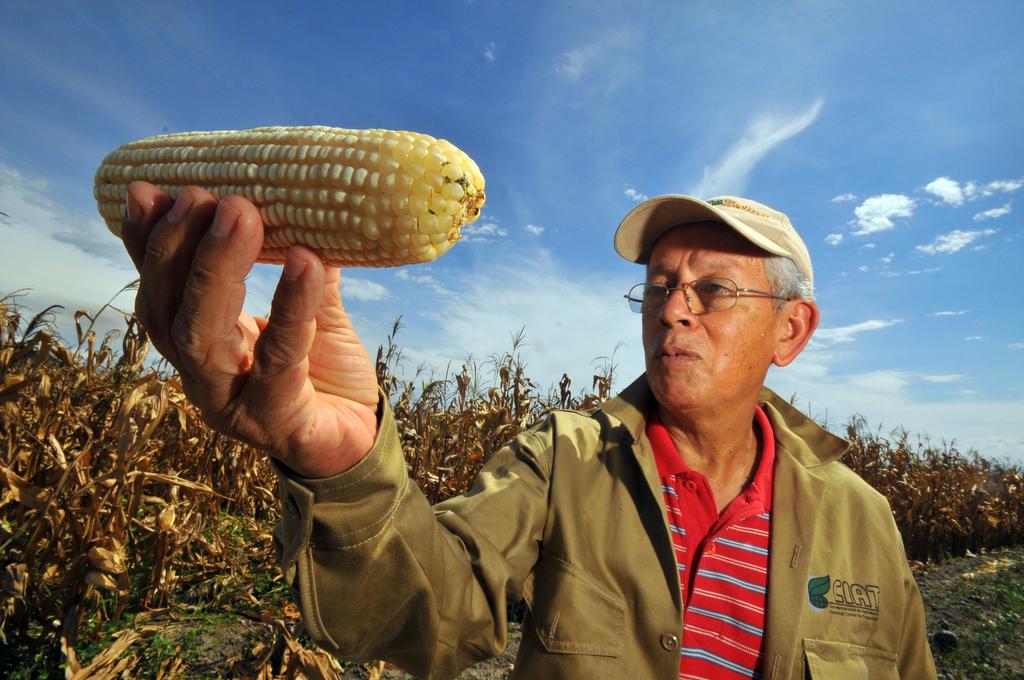 Farmer looking at corn