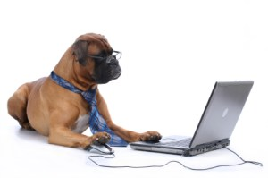 computerdog 300x199 - Three Surprising Lessons I Learned from Building an E-Commerce Business