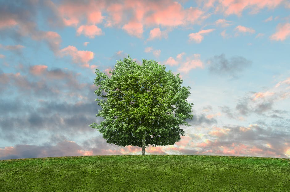 nature sky twilight grass 9198 - The Zero-Waste Starter Kit That Makes Green Living SO Easy