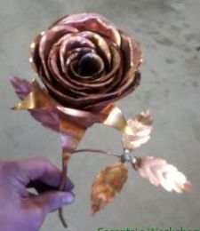 First Copper Rose