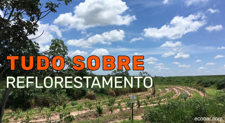 Foto mostra área de reflorestamento Ecooar