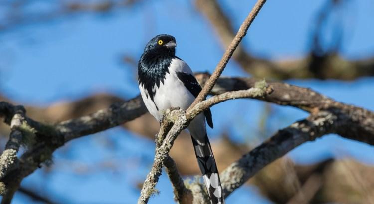 Exposição Aves da Mata Atlântica