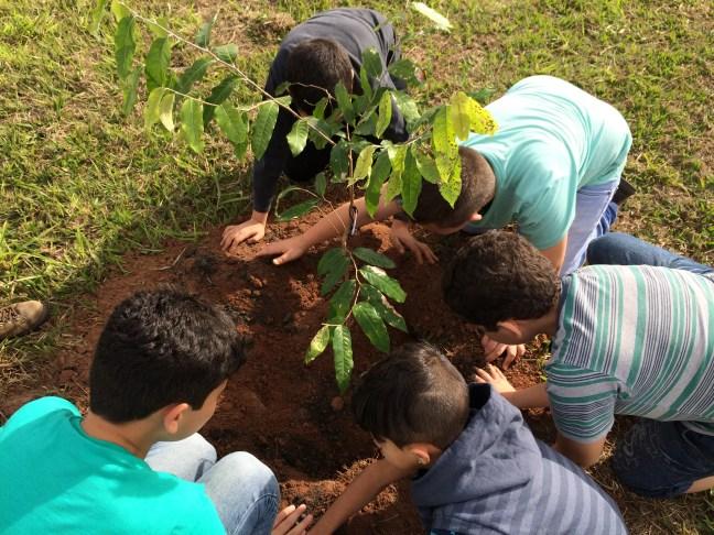 Foto mostra crianças plantando uma árvore para combater o efeito estufa
