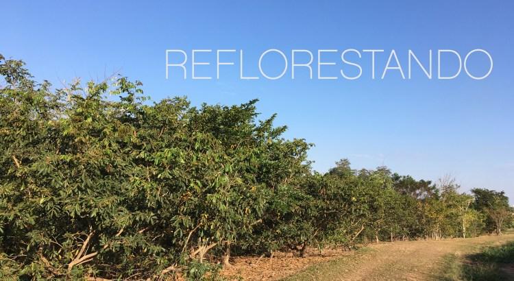 A importância da restauração das florestas