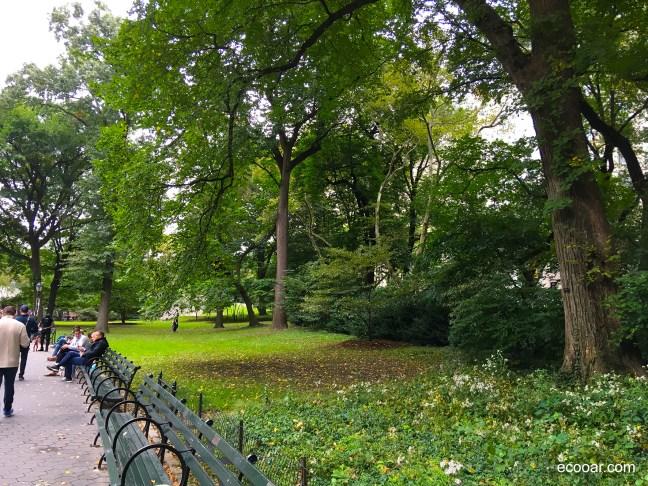 Foto mostra bancos do Central Park com árvores ao fundo