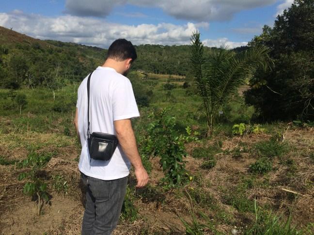 Foto mostra pessoa em área de reflorestamento