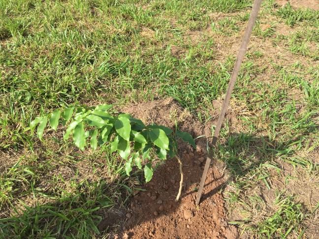 Foto mostra árvore plantada para empresa presente na Exposec