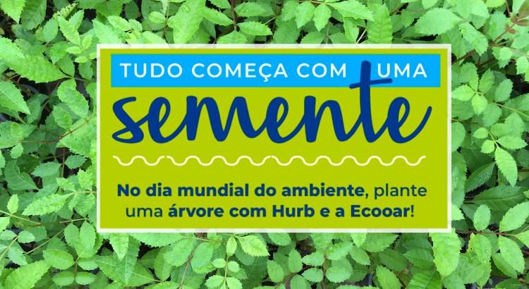 Foto mostra mudas de Aroeira Pimenteira com arte HURB (Hotel Urbano) e Ecooar