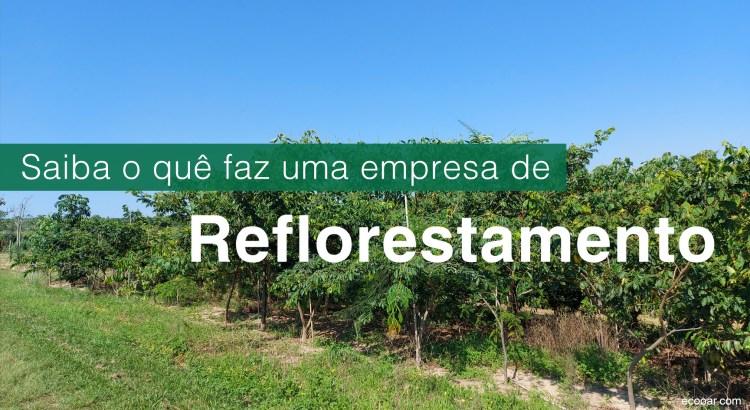 Foto mostra uma área de reflorestamento em formação