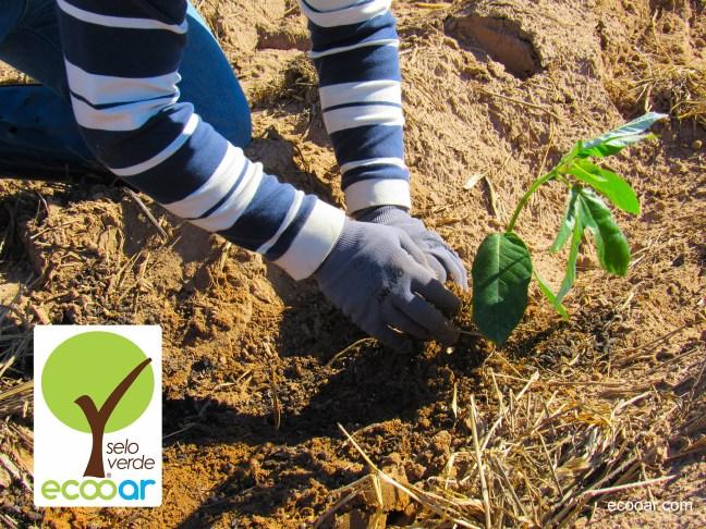 Foto mostra pessoa plantando uma muda de árvore