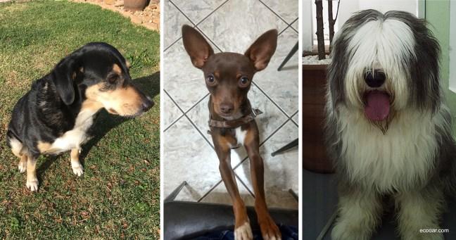 Foto mostra três imagens onde cada cão é de uma raça