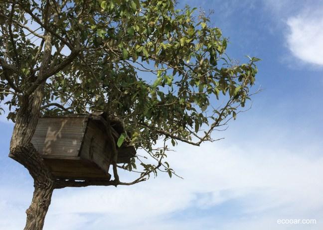 Colmeia sobre uma árvore