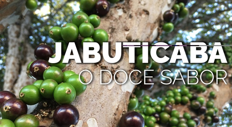 Foto mostra jabuticabeira com frutos de Jabuticaba