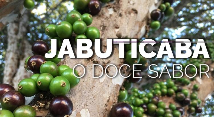 Foto mostra jabuticabeira com frutos de Jabuticaba