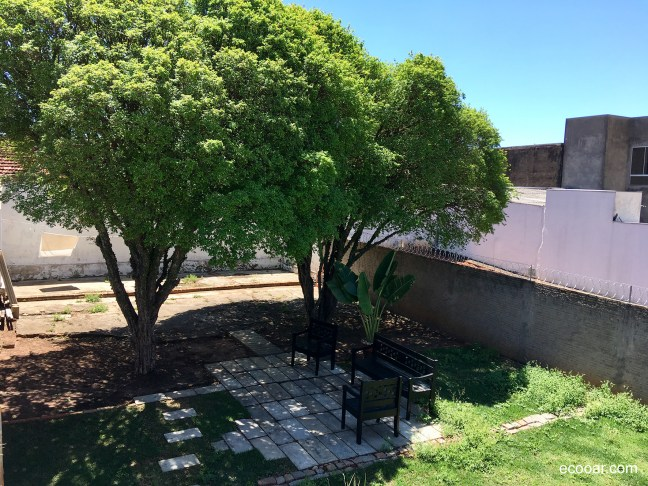 Foto mostra duas árvores de Jabuticaba no quintal de uma casa
