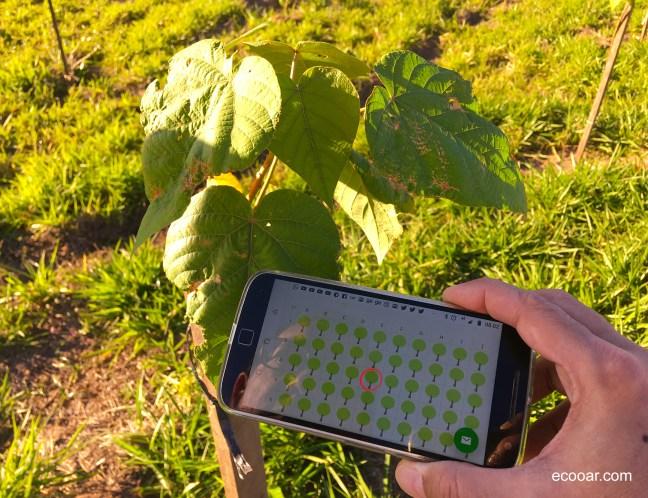 Foto mostra muda de árvore plantada e um smartphone com a localização da árvore na tela