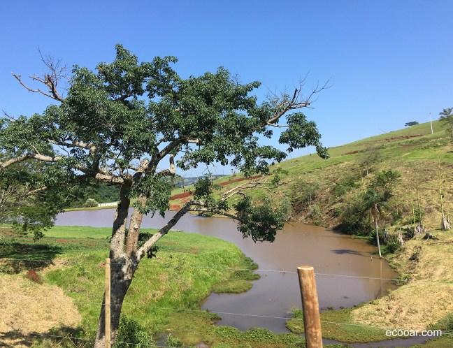 Foto mostra um rio e uma árvore em primeiro plano