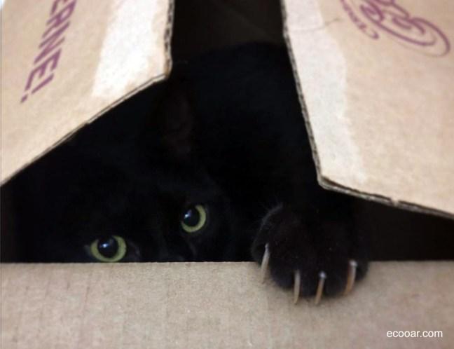 Foto mostra gato dentro de uma caixa
