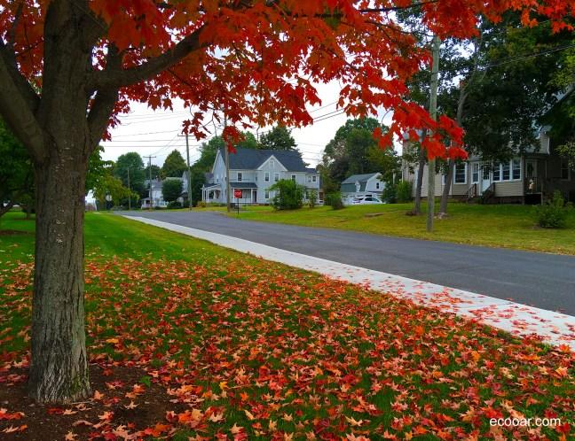 Foto mostra árvore Maple com suas folhas caídas em uma rua em Portland, Connecticut, Estados Unidos