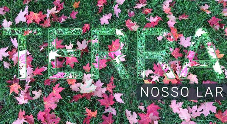Foto mostra folhas de árvore em um gramado